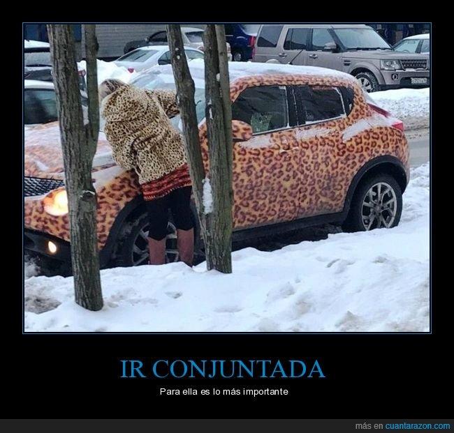 coche,conjuntada,leopardo