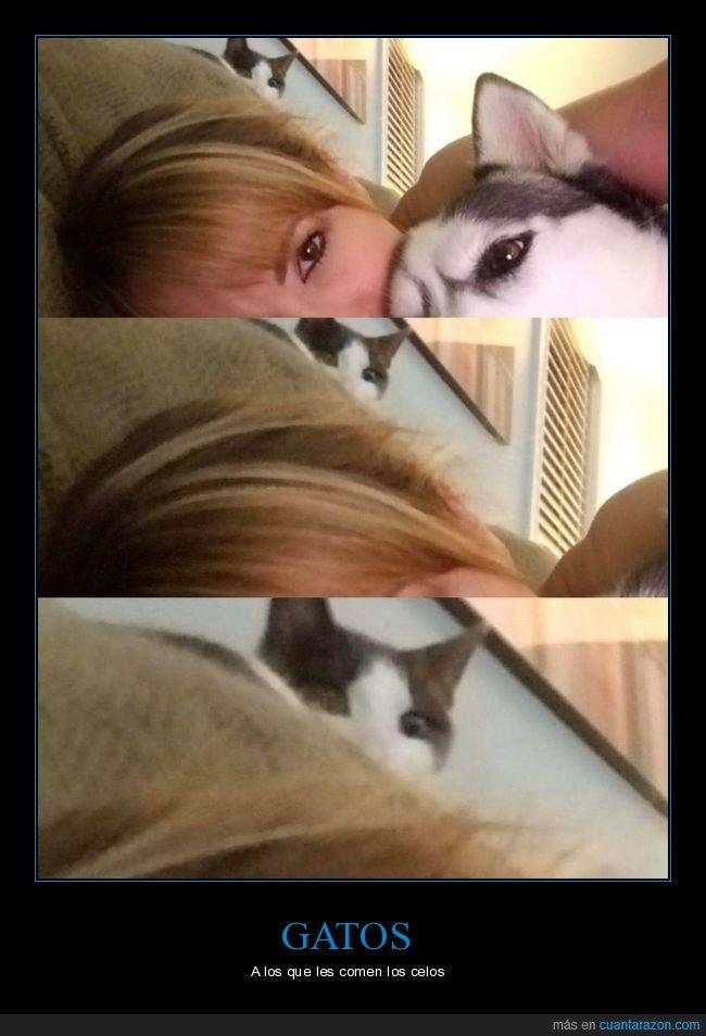 celos,gatos,mirada,perros