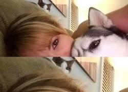 Enlace a Celos felinos