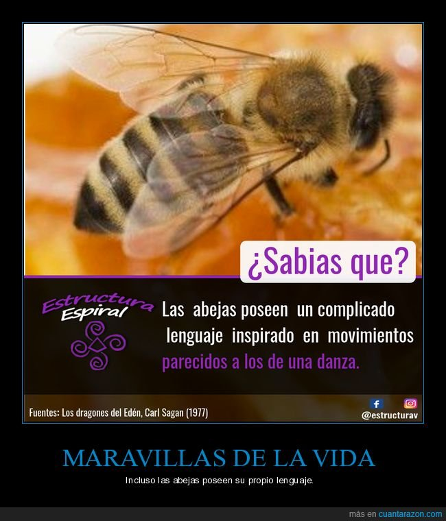 abejas,curiosidades,danza,lenguaje,movimientos