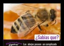 Enlace a El lenguaje de las abejas