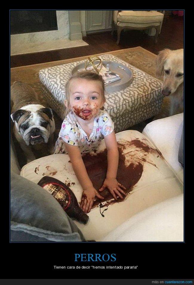 chocolate,fails,niña,perros,sofá