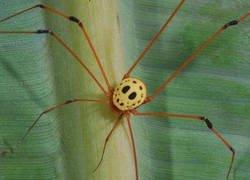 Enlace a Araña fan de Viernes 13