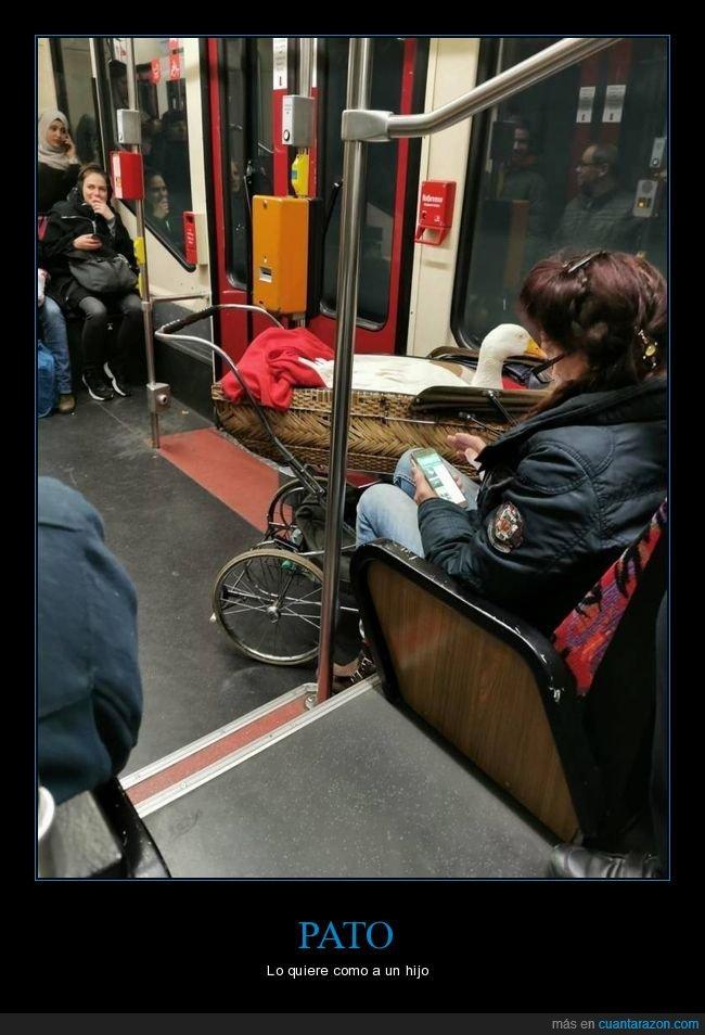 carrito,metro,pato,wtf