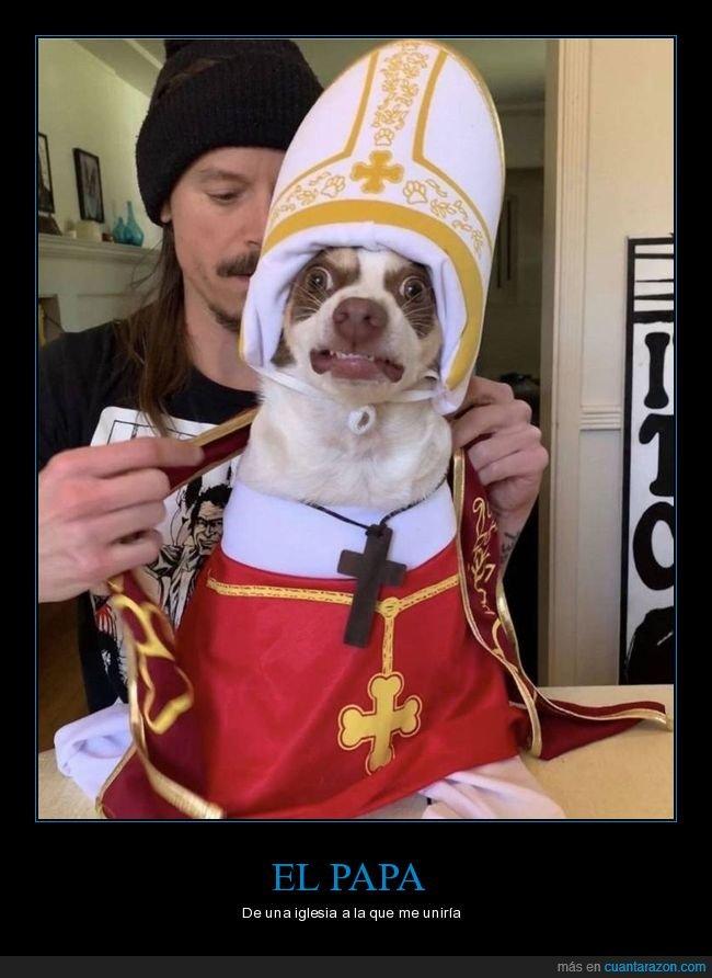 disfraz,papa,perro
