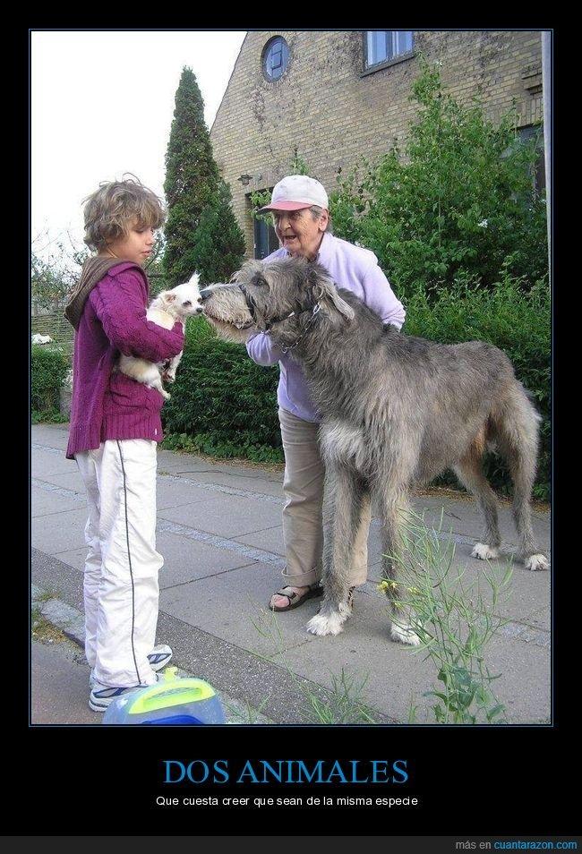 animales,perros,tamaño