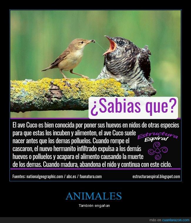animales,ave,engaño,naturaleza,pajaros