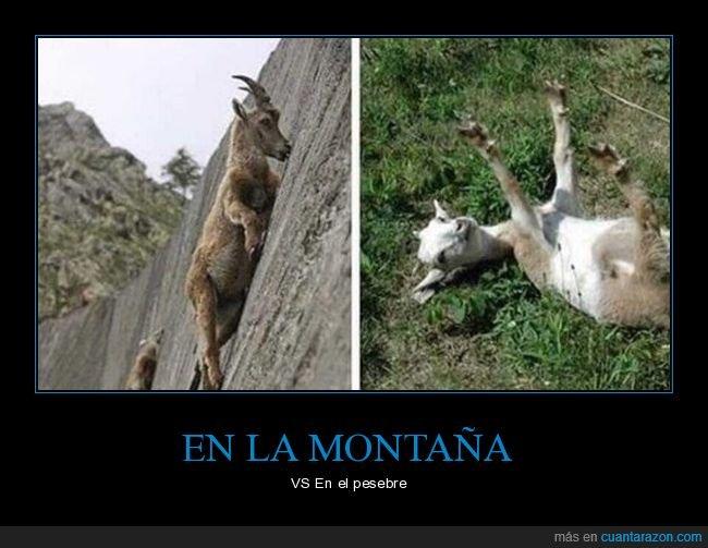 cabras,montaña,pesebre