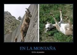 Enlace a Cosas de cabras