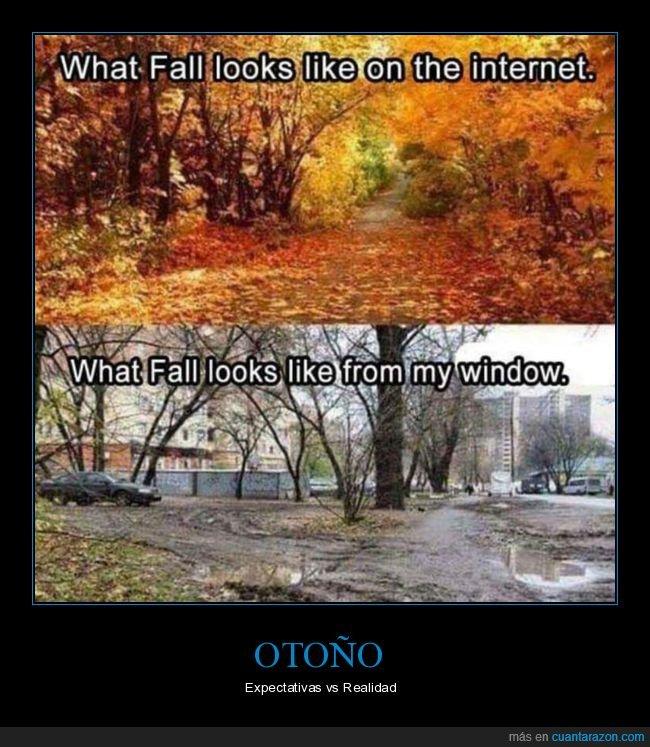 expectativas,otoño,realidad