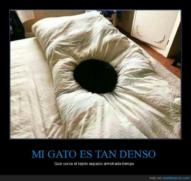agujero negro,denso,gato