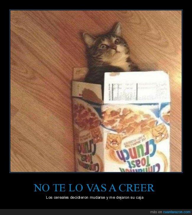 caja,cereales,gatos