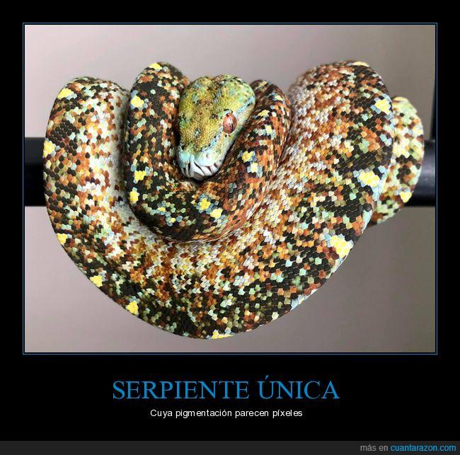 pigmentación,píxeles,serpiente