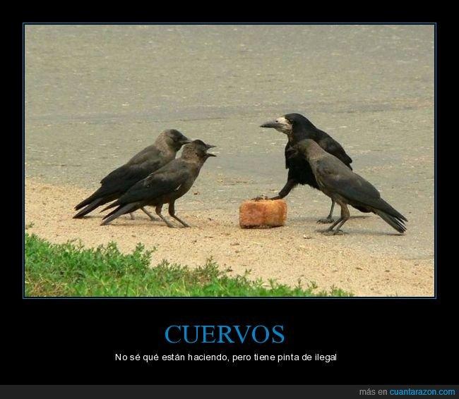 cuervos,wtf