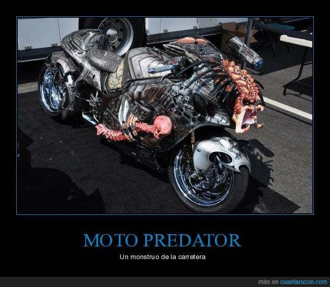 depredador,moto