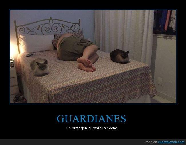 cama,durmiendo,gatos,wtf