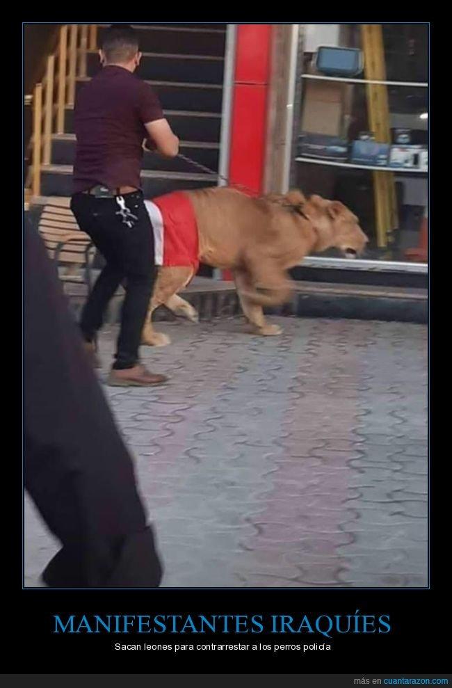 irak,leones,manifestantes,perros,policía,wtf