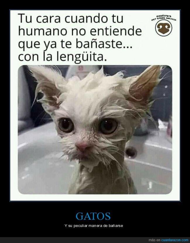 bañarse,gatos,lengua