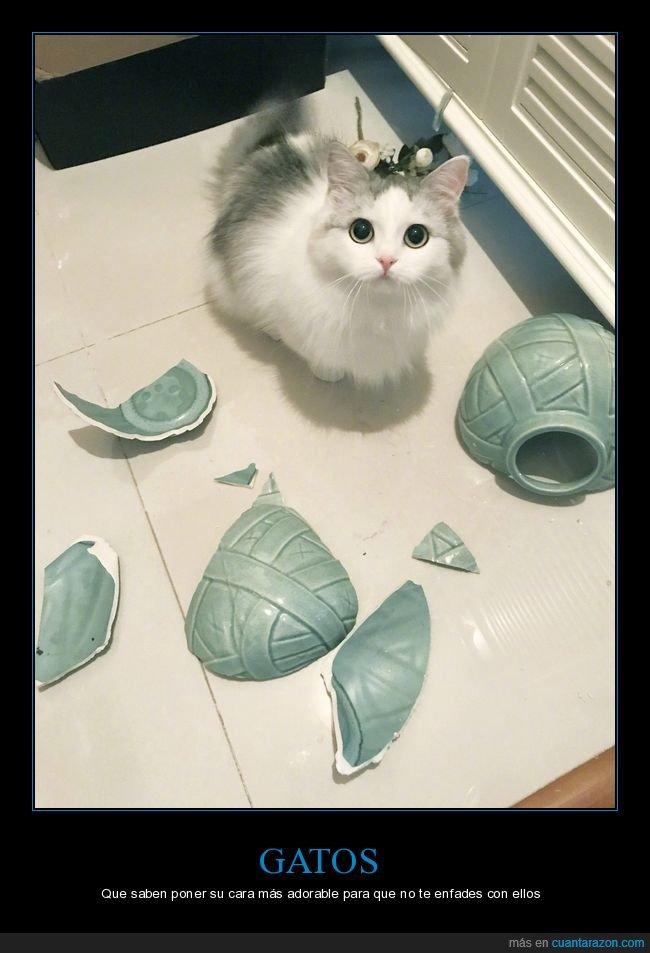 cara,gatos,jarrón,roto