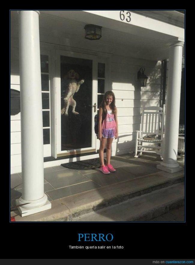 perros,puerta,wtf