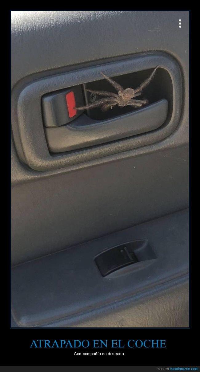 araña,atrapado,coche