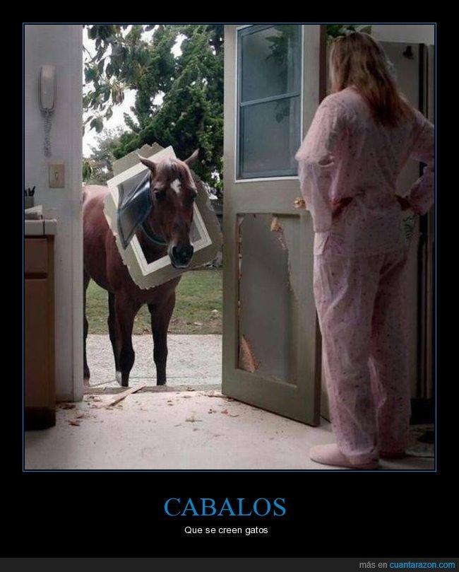 caballo,fails,gatera,puerta