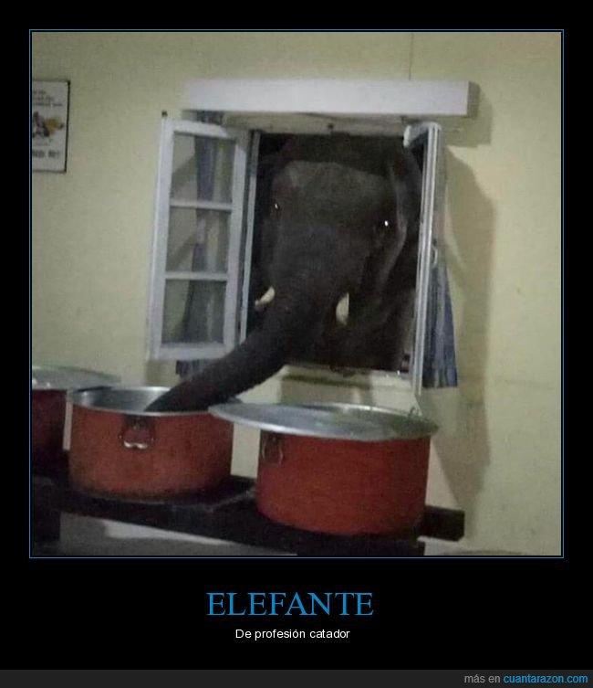 comida,elefante,ventana,wtf