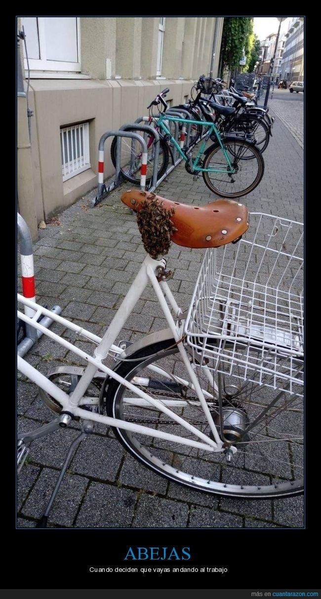 abejas,bicicleta,fails,wtf