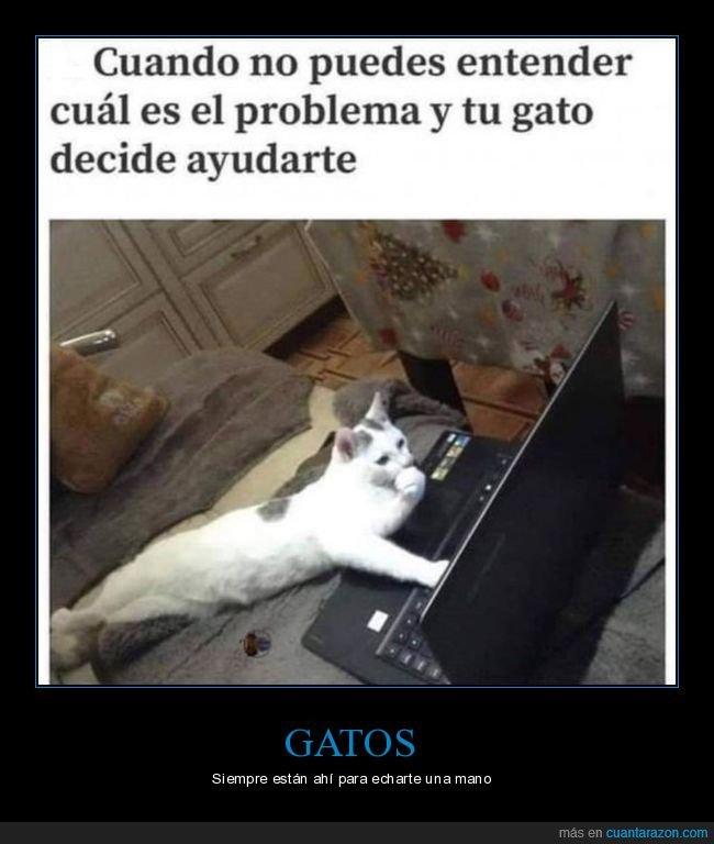 ayudando,gatos,ordenador