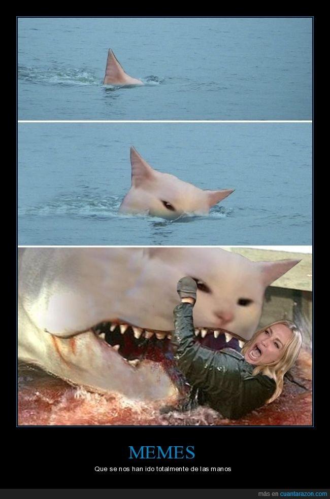 absurdo,gritando al gato,tiburón