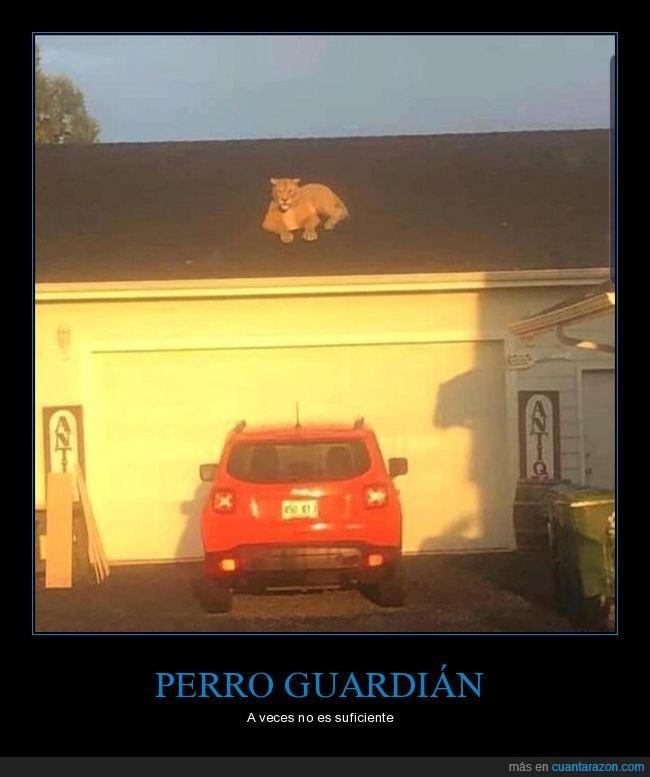 casa,león,leona,tejado,wtf