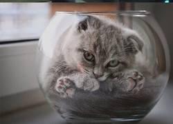 Enlace a Gatos líquidos que toman la  forma de sus contenedores