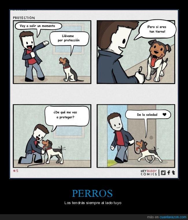 perros,protección,soledad
