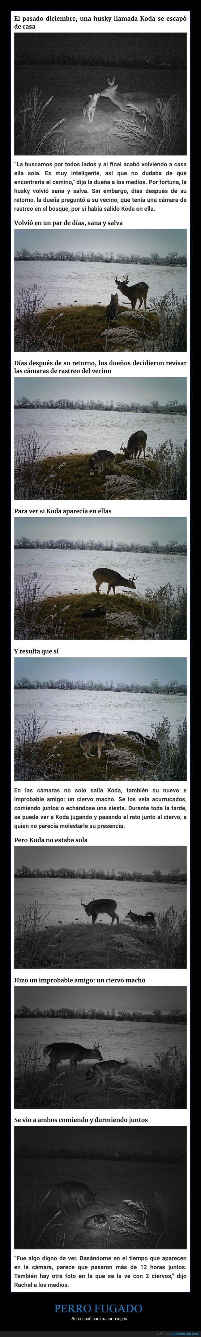 amigos,ciervo,escaparse,perros