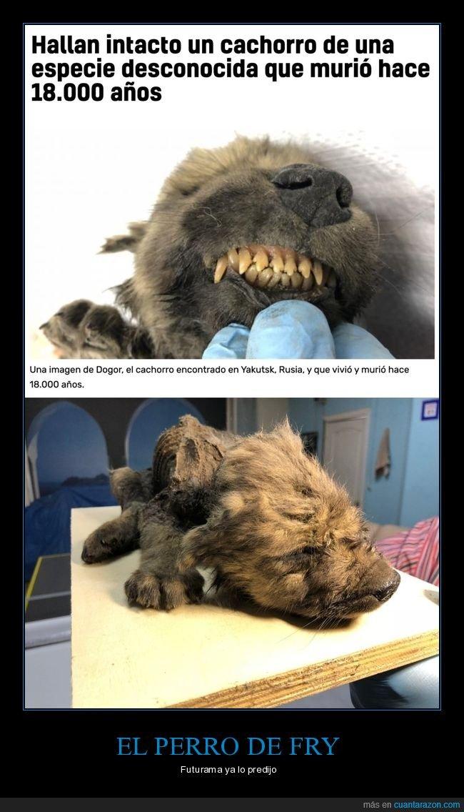 18000 años,cachorro,hallazgo,perro