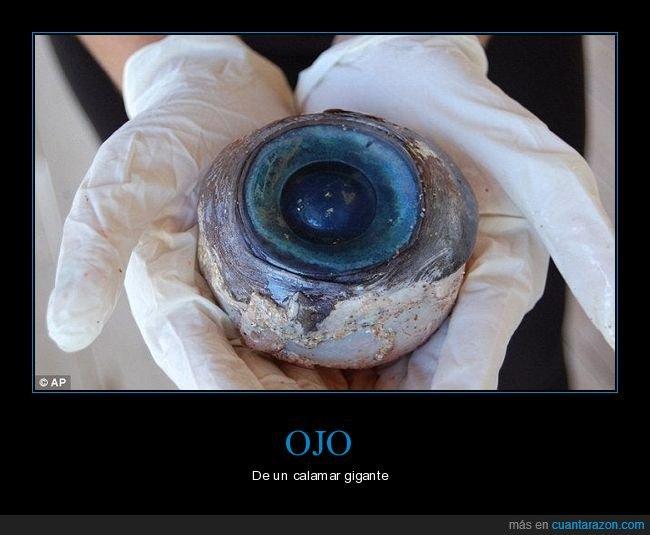 calamar,gigante,ojo