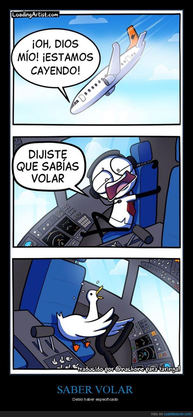 avión,cayendo,pato,volar