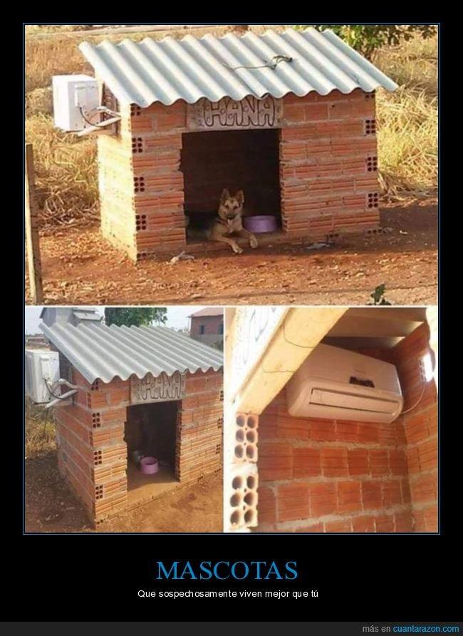 aire acondicionado,caseta,perro