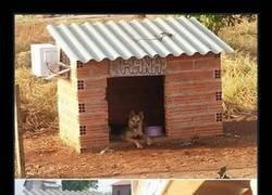 Enlace a Me da que este perro anda metido en negocios turbios...