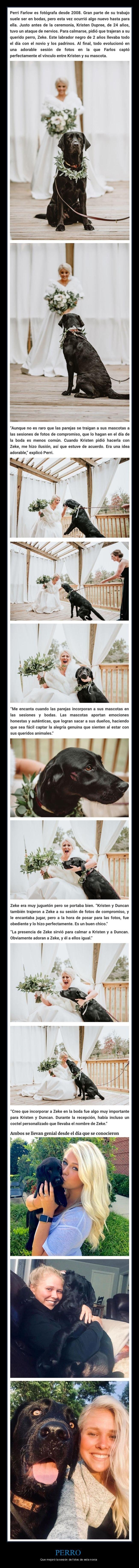 novia,perro,sesión de fotos