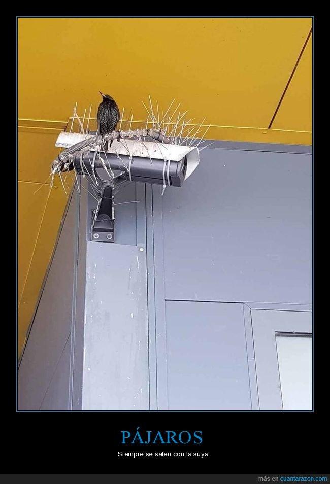 cámara,pájaro,pinchos