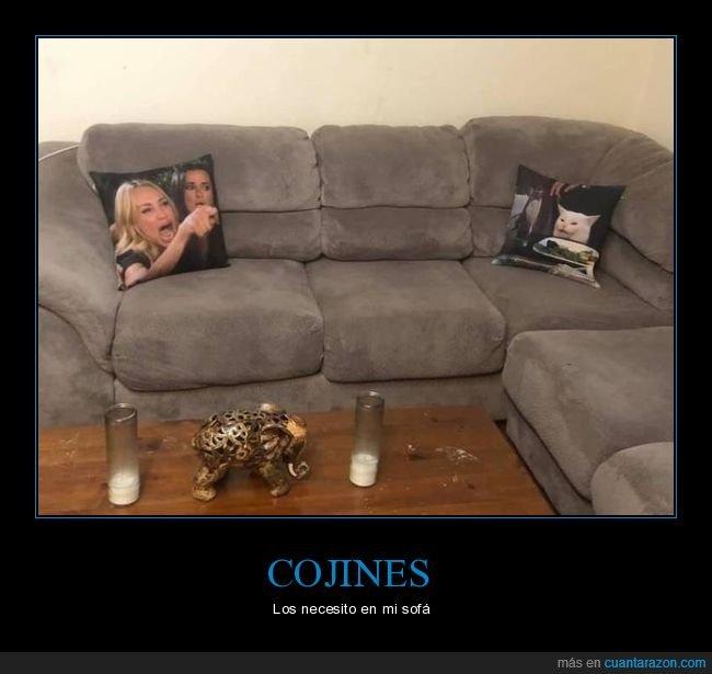 cojines,gritando al gato,sofá