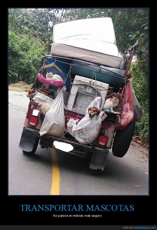 coche,mascotas,transportando,wtf