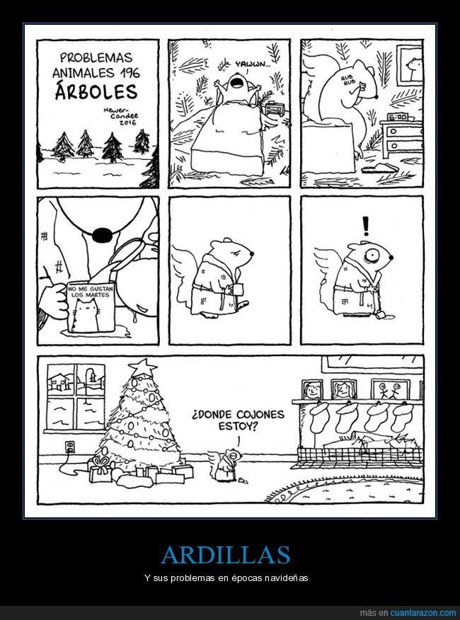 árbol,arbol de navidad,ardillas,problemas