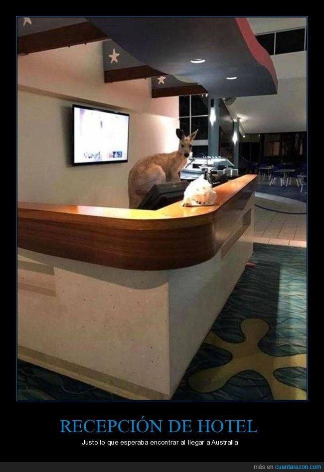 australia,canguro,hotel,recepción