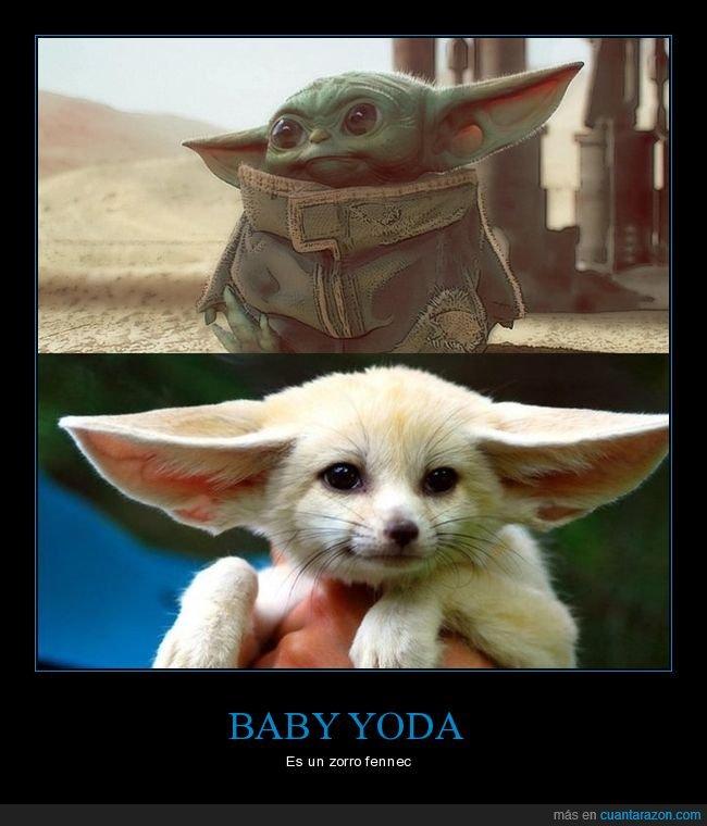 baby yoda,parecidos,zorro fennec