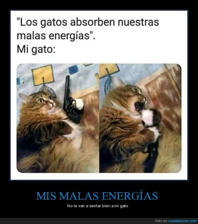 absorber,gatos,malas energías