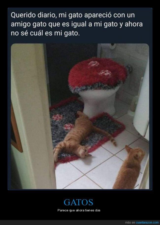 amigo,distinguir,gatos
