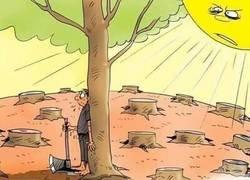 Enlace a A tomar el sol