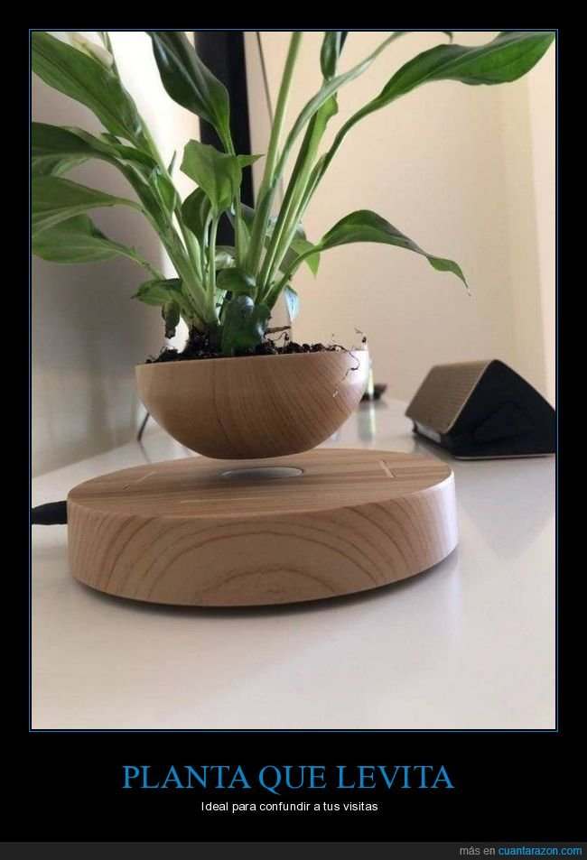 levitando,planta,wtf